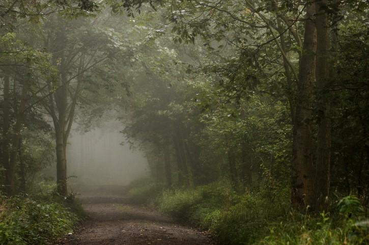 W porannej mgle