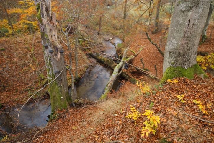 Huczek jesiennie
