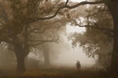 W stumilowym lesie
