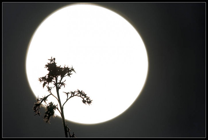 Pod Światła Osłoną...