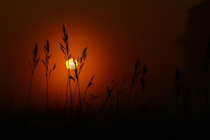 Lipcowe trawy o świcie.