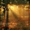 W lesie o ppranku