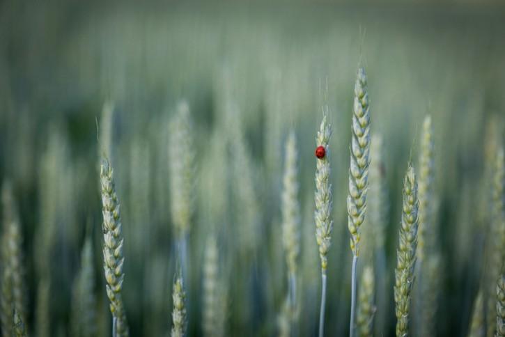 Czerwone na zielonym