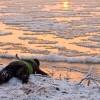 foki na nasz widok uciekały do wody :)