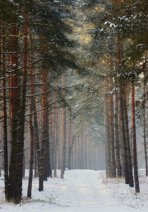 I z lasu coś się znajdzie