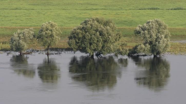 Drzewa nad Odrą