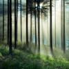 Lipcowy las