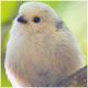 Co to za ptak? - Ptaki lądowe - ostatni post przez Amanda