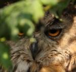 Leśne Oko - zdjęcie