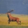 Zając szarak - Lepus capensis - ostatni post przez Danieel125